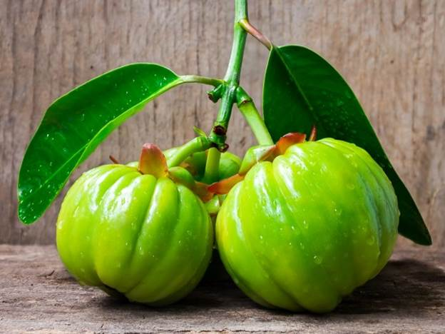 Description: Image result for garcinia cambogia
